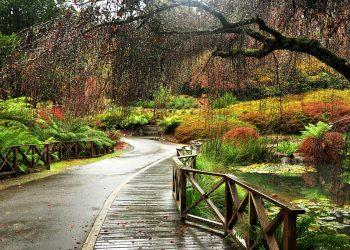 Autumn in the Dandenong Ranges, Victoria. Photo credit: Adrian Mohedano via Wikimedia Commons