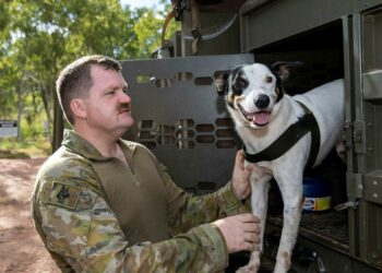 Explosive detection gog, Cheese, of the 1st Combat Engineer Regiment, and his handler Sapper Luke Saxton. Photo: Corporal Rodrigo Villablanca