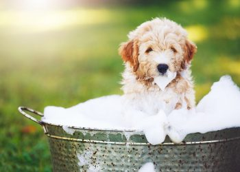 How often should you wash your dog in Summer?