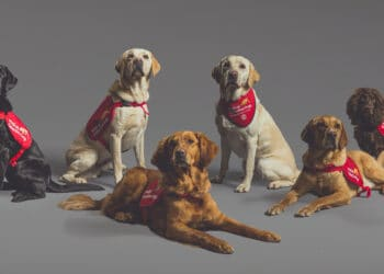 Asher (second from right) and his canine colleagues have been trained to detect the smell of Covid-19 and play a vital role in preventing further spread of the pandemic in future. Photo credit: Neil Pollock of MDD