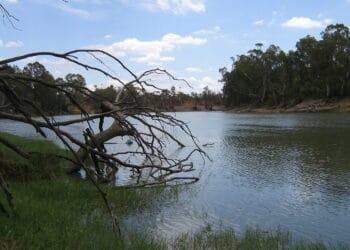 Murray River. Photo credit: Scott Davis via Wikipedia