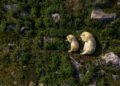 Wildlife Photographer of the Year Winners Announced